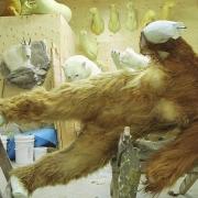 Stuffed Bigfoot - Ken Walker works on his sasquatch taxidermy