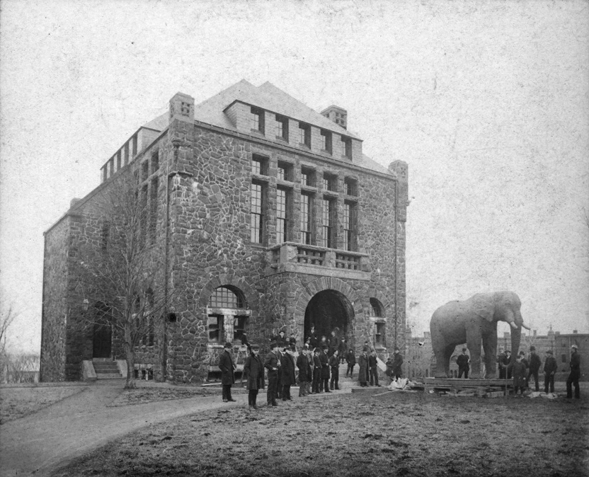 Moving Jumbo into Barnum Hall, 1889