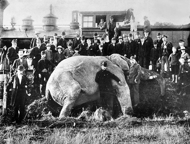 A crowd poses with the lifeless body of Jumbo the elephant
