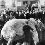 The death of Jumbo the elephant