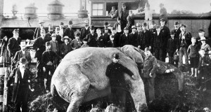 The death of Jumbo the elephant