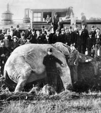 jumbo-elephant-sm