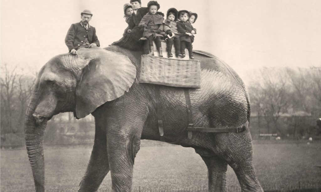 Jumbo giving rides to children at the London zoo