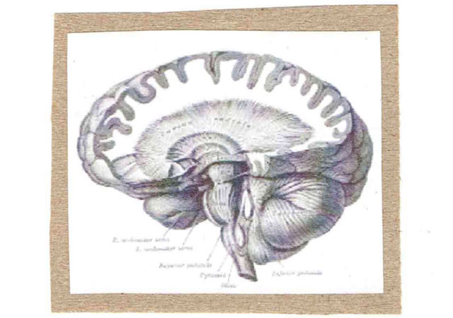 I lobe you brain anatomy greeting card