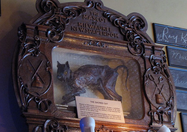 The Sacred Cat hangs above the bar in Milwaukee's Newsroom Pub