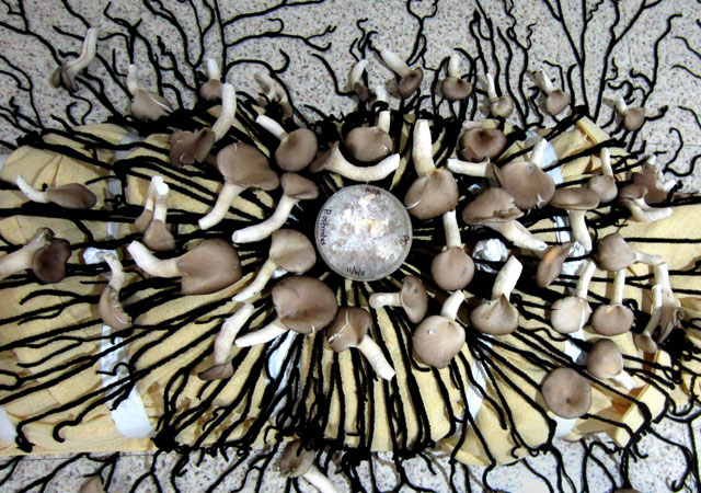The Infinity Burial Suit uses mushrooms to aid decomposition