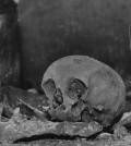 shakespeare-skull-stolen-sm