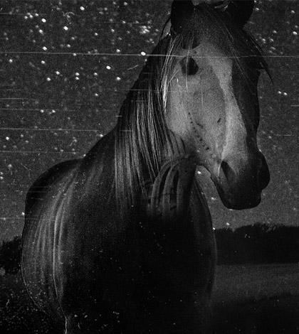 snippy-horse-mutilation-sm
