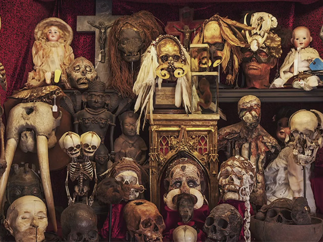 Some of the skulls, bones and other oddities on display at the Viktor Wynd Museum