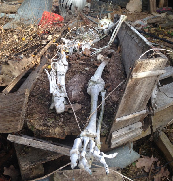 Odd Fellows skeleton found in Oklahoma barn