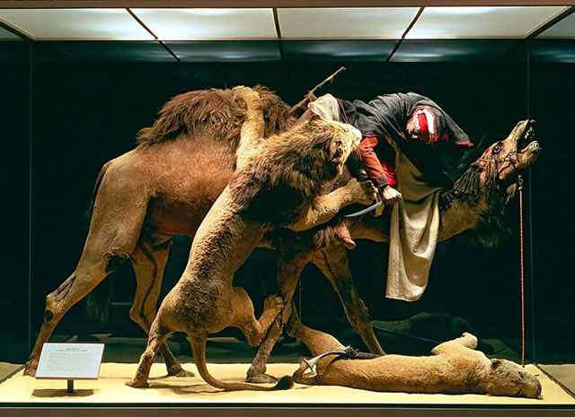 Arab Courier Attacked by Lions taxidermy diorama at the Carnegie Museum of Natural History