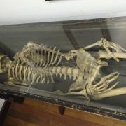 Belvoir Winery Odd Fellows skeleton