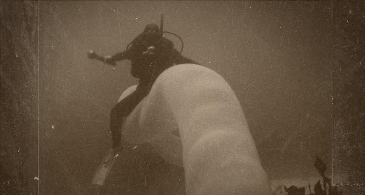 Diver rides a pryosome