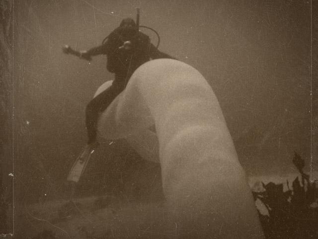 Diver rides a pyrosome