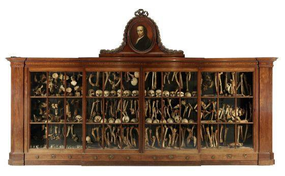 Jacob Hovius cabinet of bones
