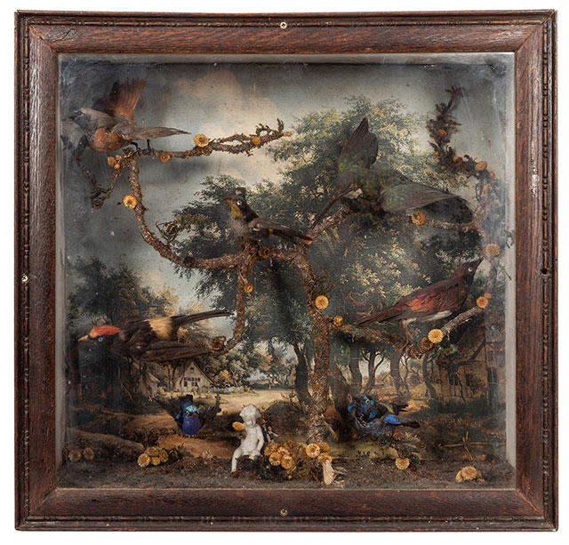 Victorian taxidermy bird diorama