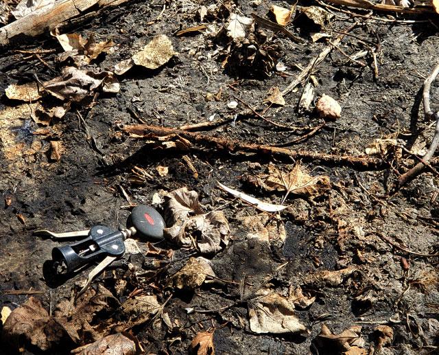 Ancient corkscrew fossil at the La Brea Tar Pits