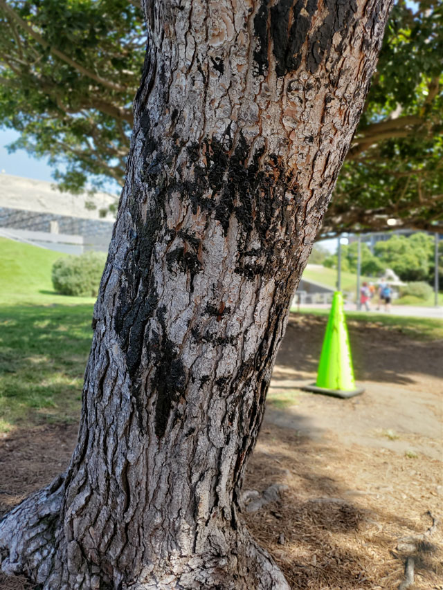 A face painted on a tree with asphalt at the La Brea tar pits