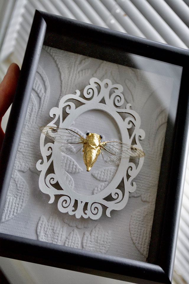 Framed gold cicada