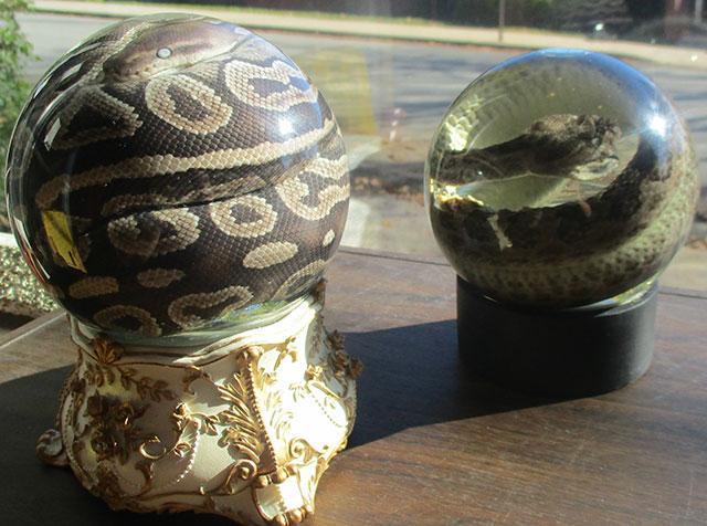 Snake wet specimens