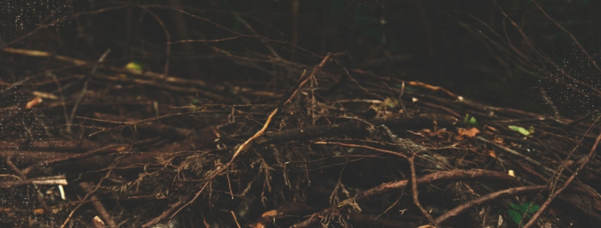 A paranormal encounter with a stick boy in the woods