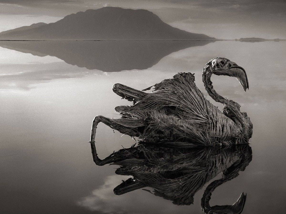Lake Natron by photography Nick Brandt