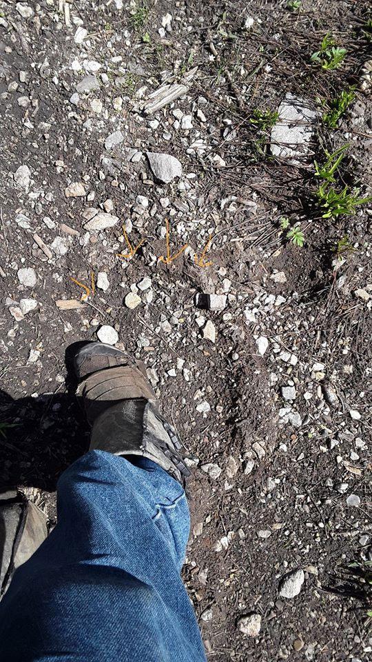 Bigfoot track found in Utah