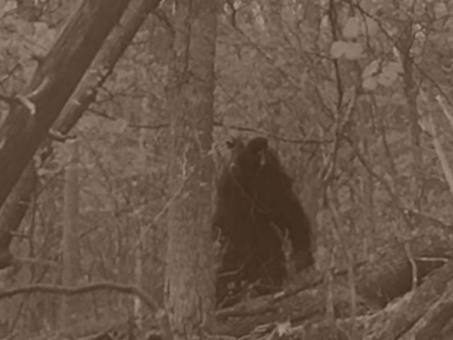 Cryptids and strange entities