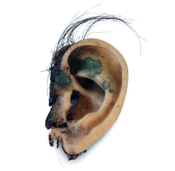 Severed ear from David Lynch's Blue Velvet