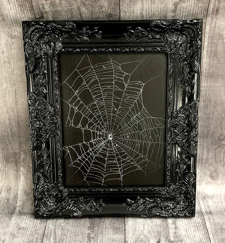 Real preserved spider web in a frame